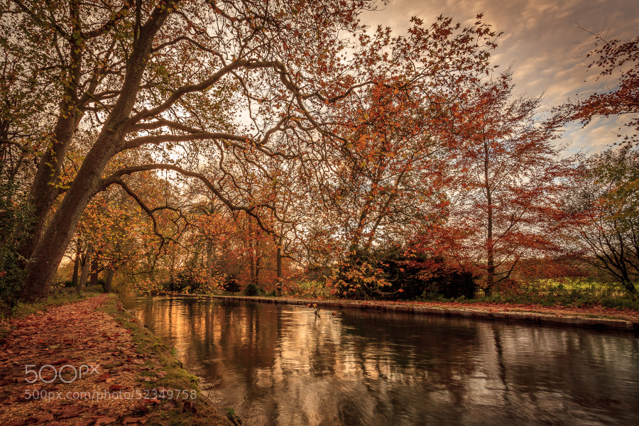 A river flowing beneath trees in Autumn