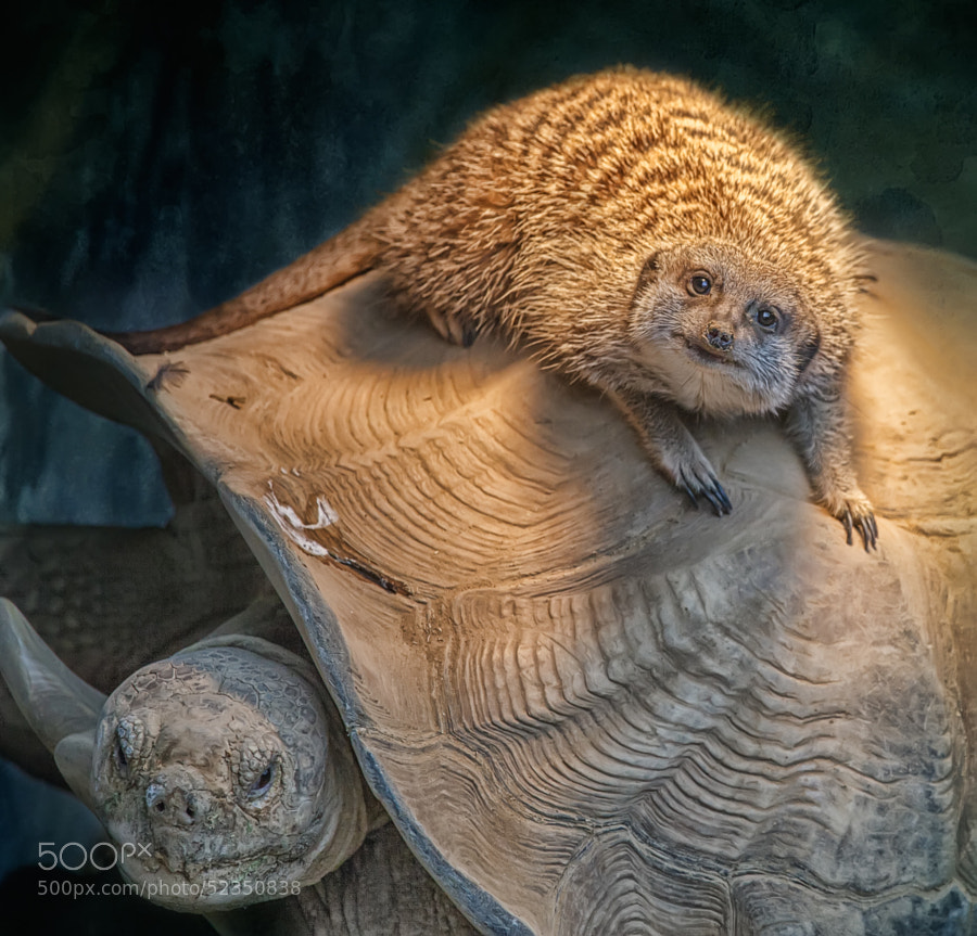 Photograph turtle back riding by Aya de Ruiter on 500px