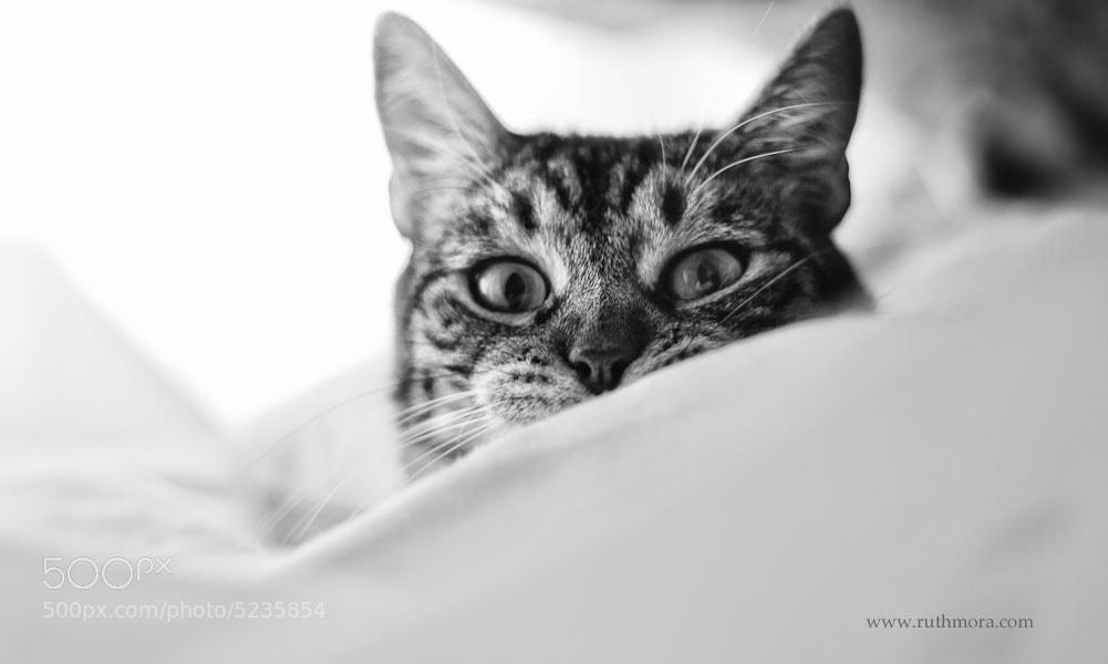 Photograph BoO.Ooo! by Ruth Mora Quesada on 500px