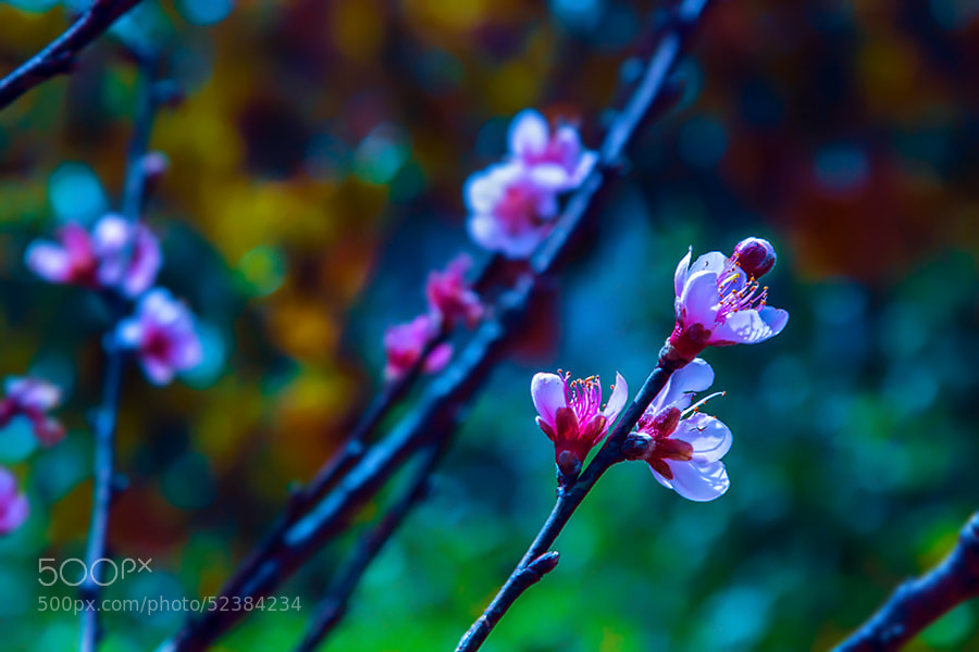 Photograph Spring signal by Amateur Pic on 500px