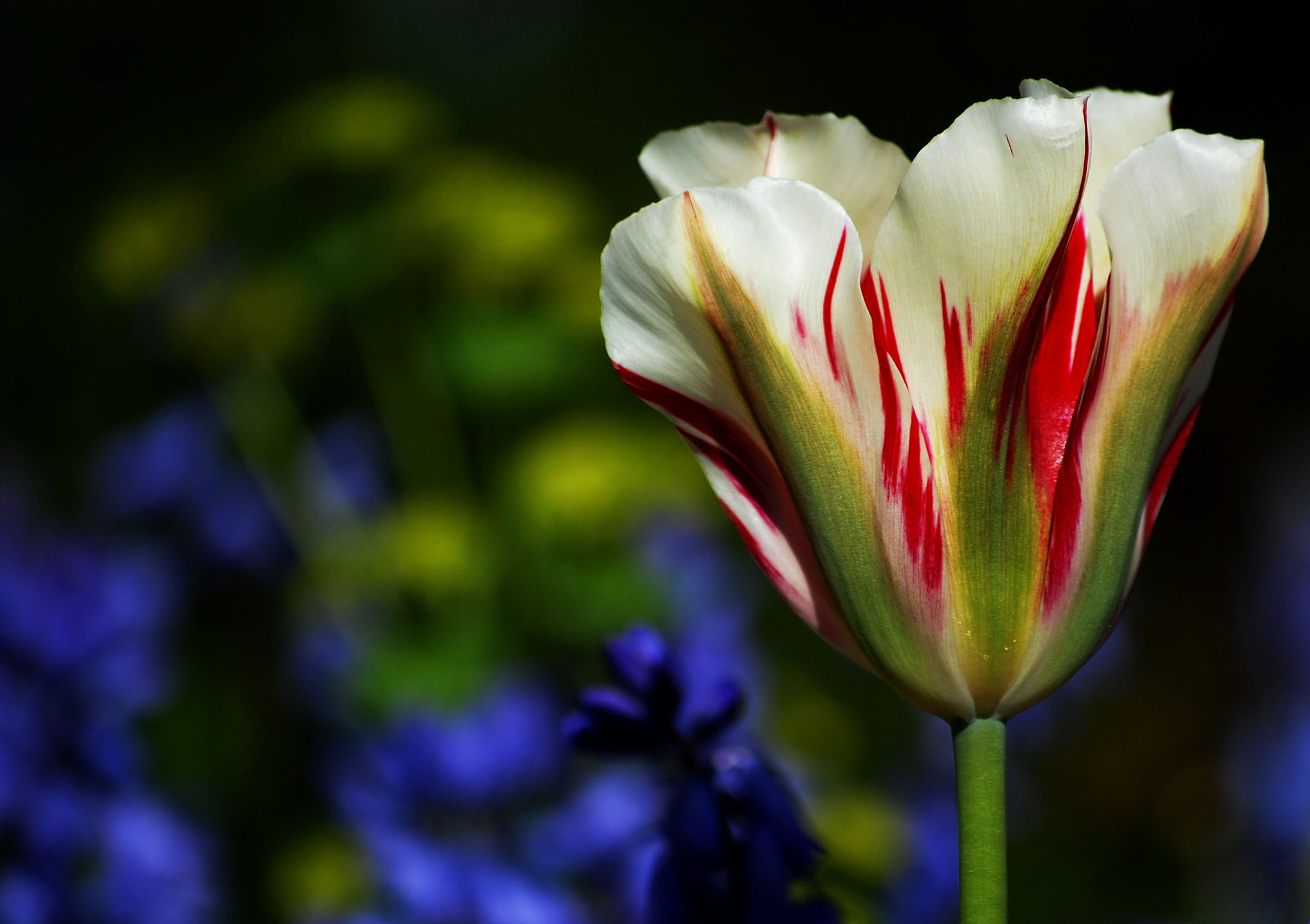 Photograph stripes by Hanne Reid on 500px