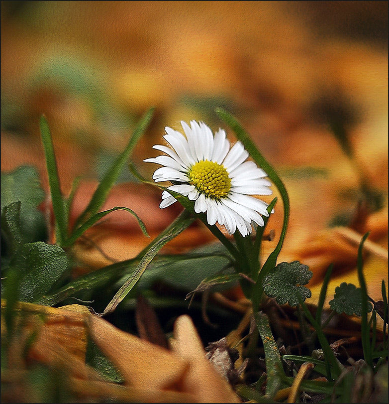 Photograph Small flower by Alla  Lora on 500px
