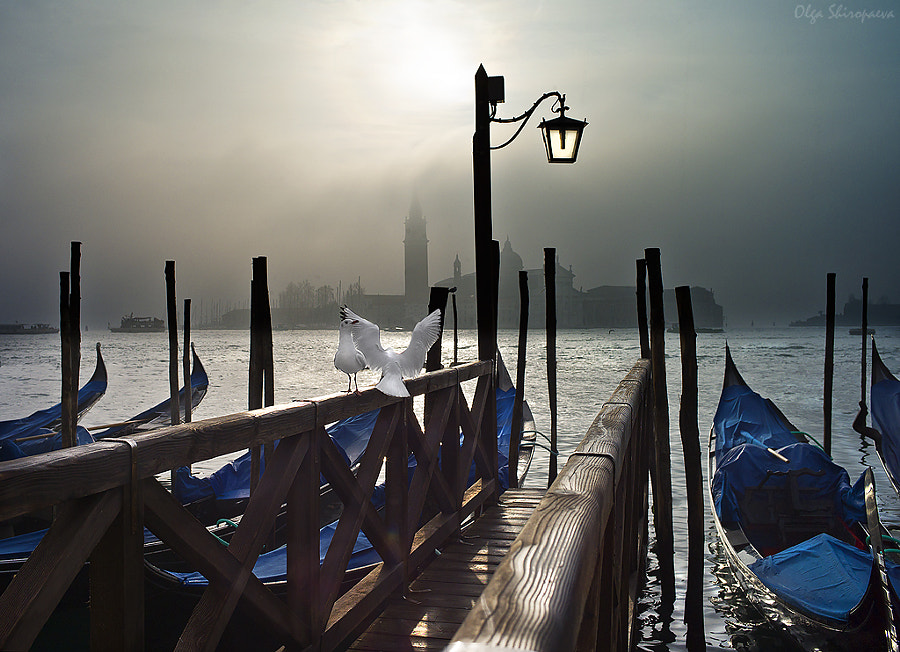 Photograph Love, pigeons, Venice. by Olga Shiropaeva on 500px