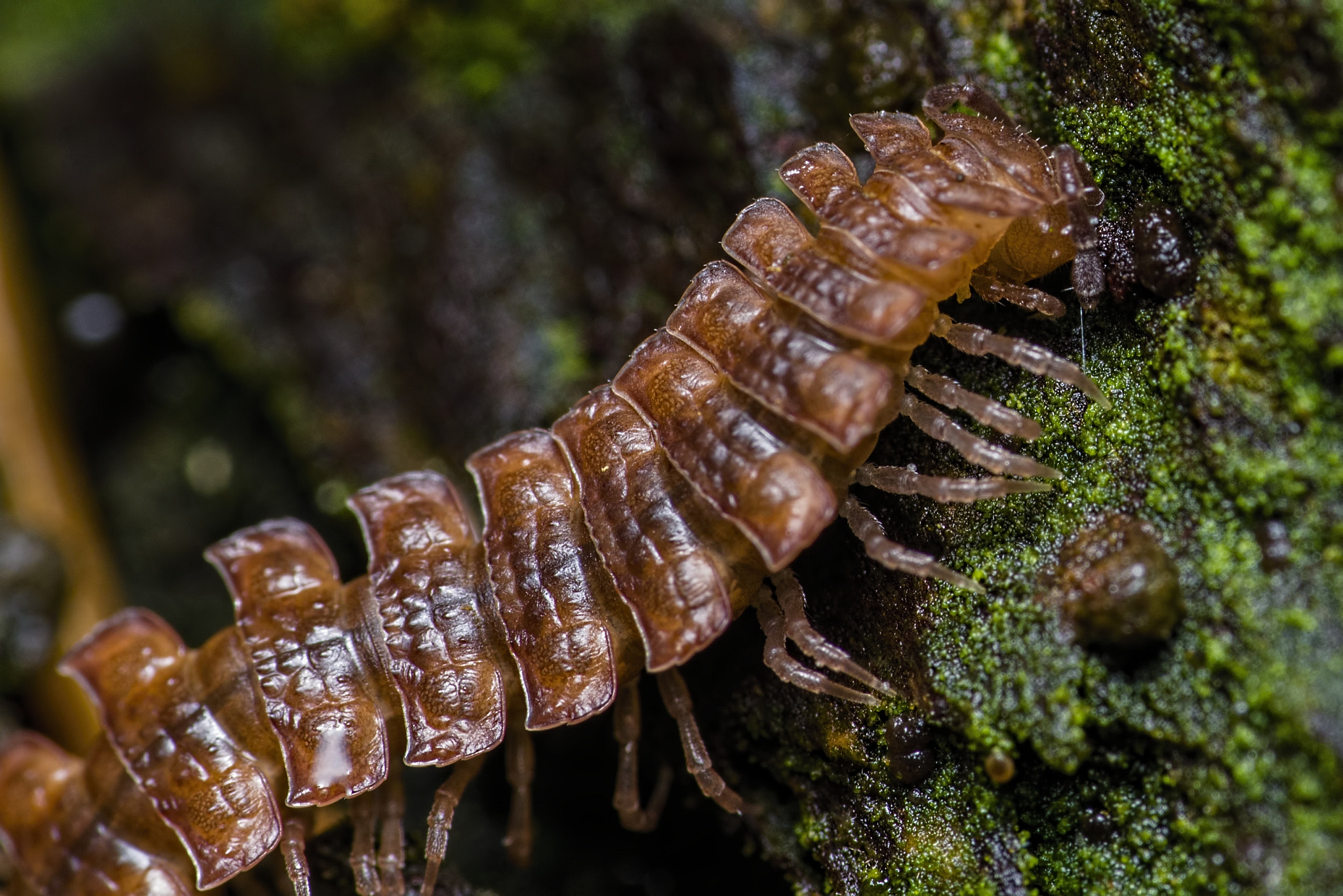 Photograph Centipede by K. Beck on 500px