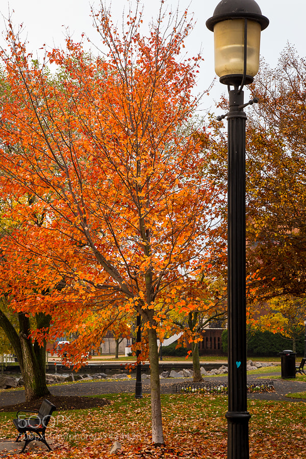 Beautiful Fall color in Founders Park.