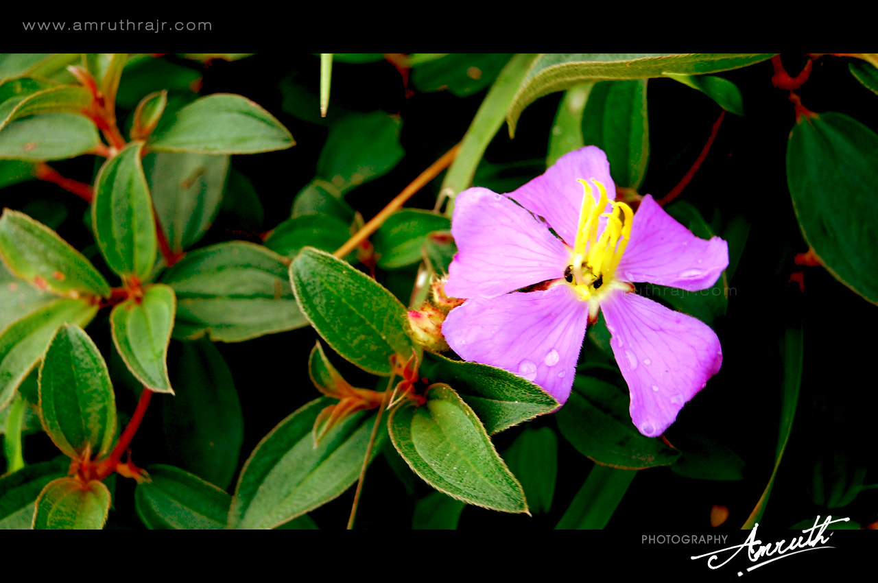 Photograph Flower by Amruth Raj on 500px