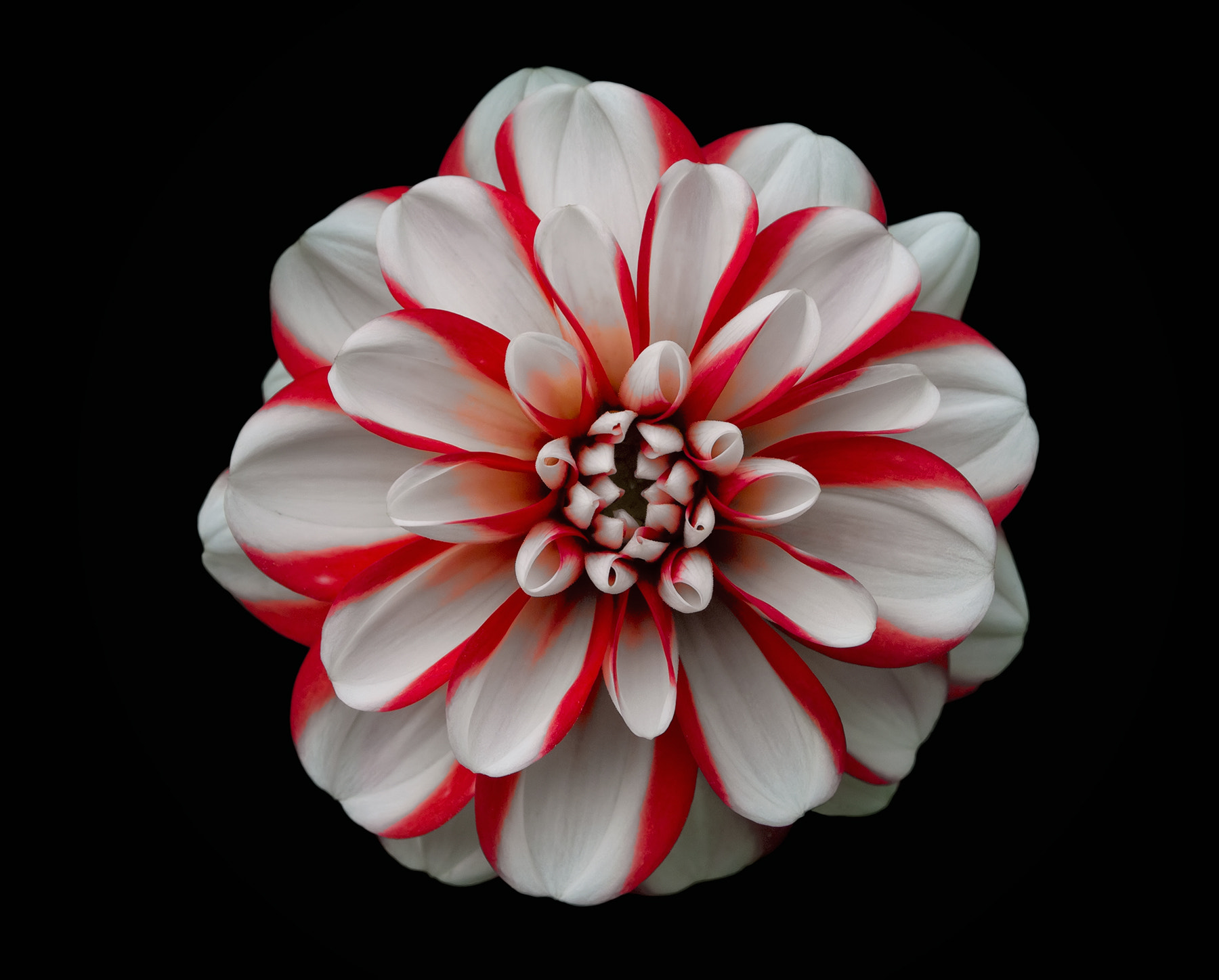 Photograph Red and white feeling by Marta Borreguero on 500px