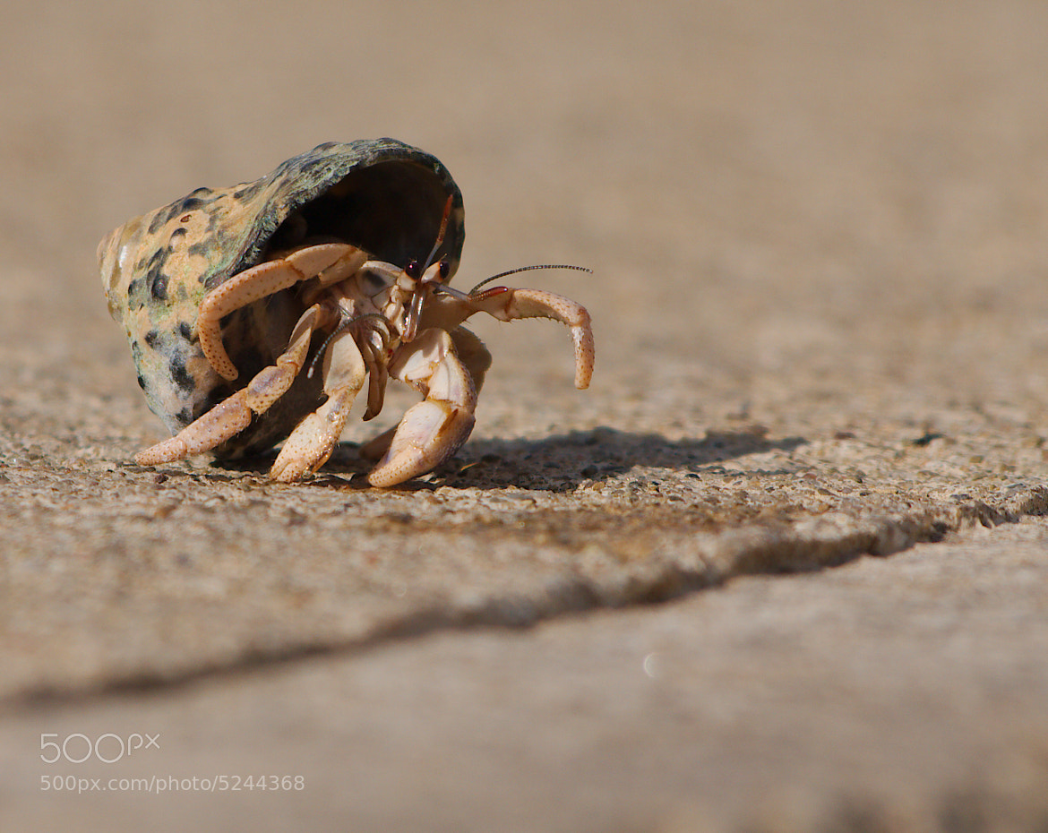 Photograph Mr. Krabbs by Brian Nelson on 500px