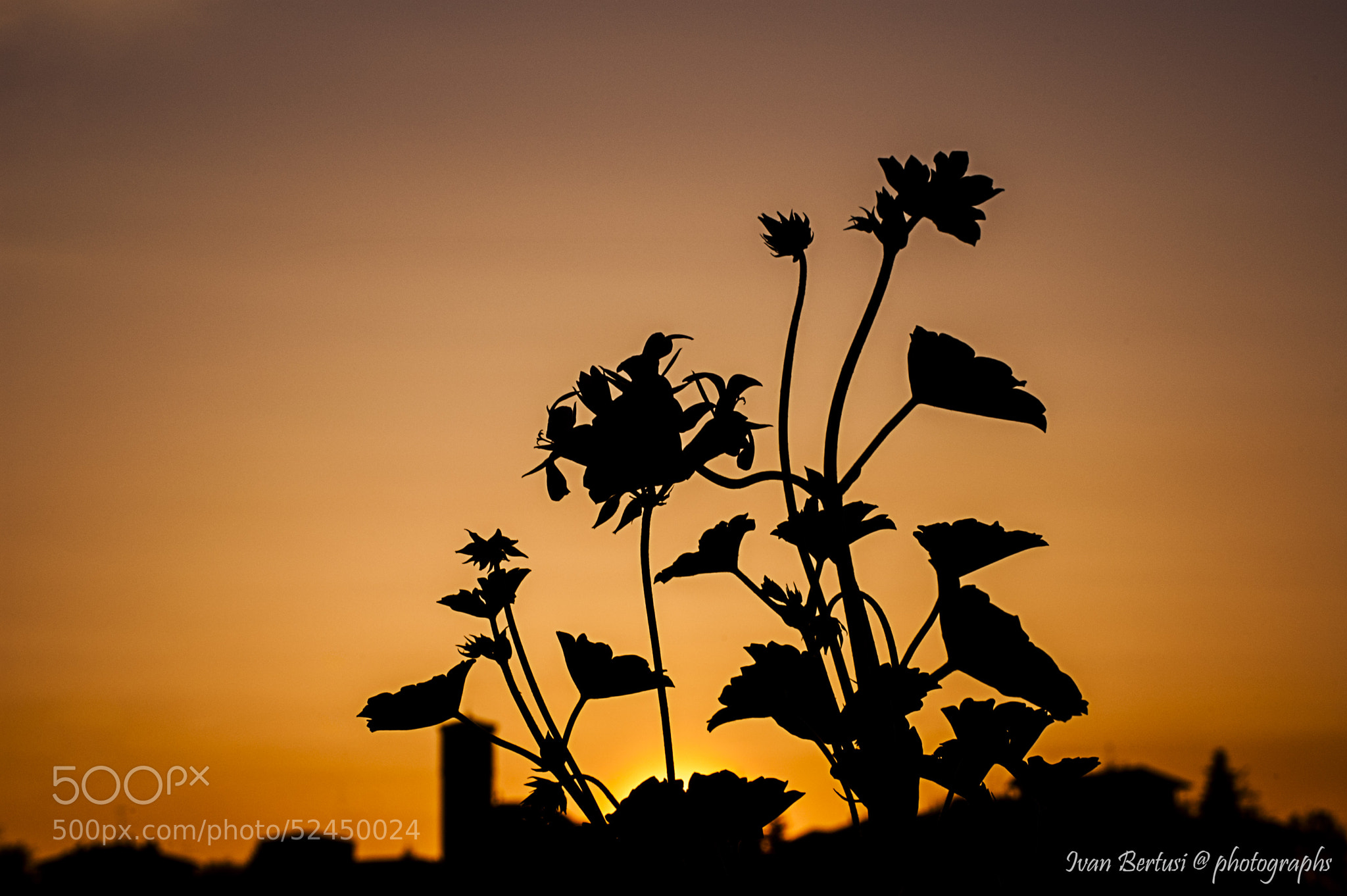 Photograph Silhouette by Ivan Bertusi on 500px