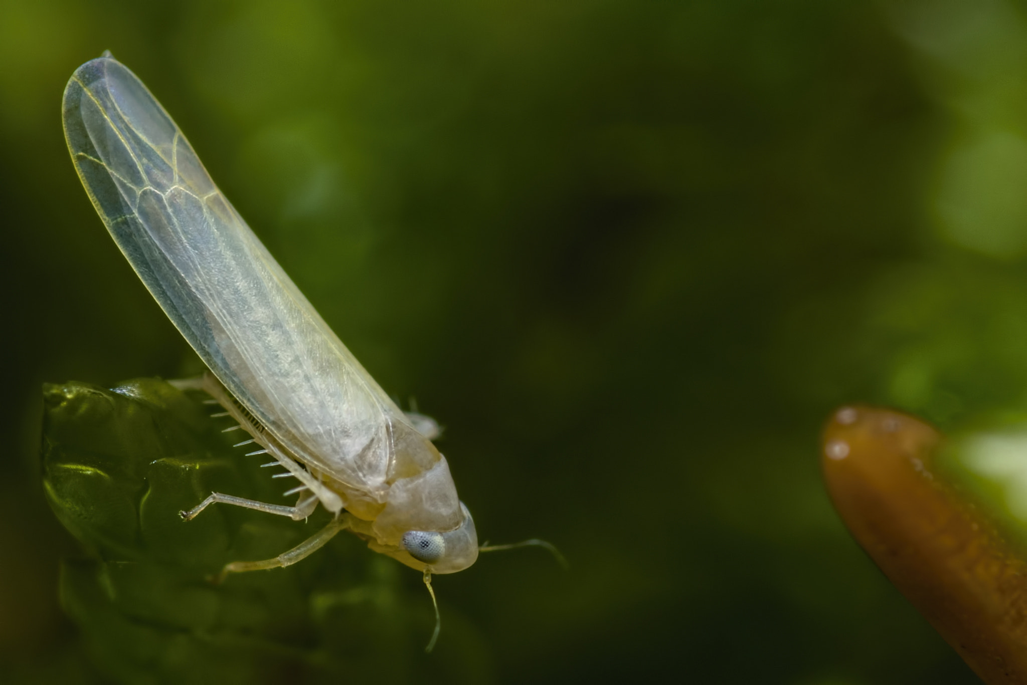 Photograph Leafhopper by K. Beck on 500px