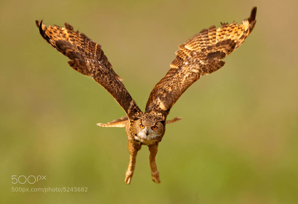 Photograph with open wings by Stefano Ronchi on 500px