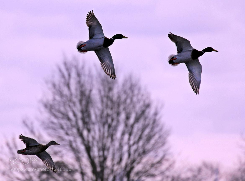 Photograph Reservoir Birds by Emin Kucuk on 500px