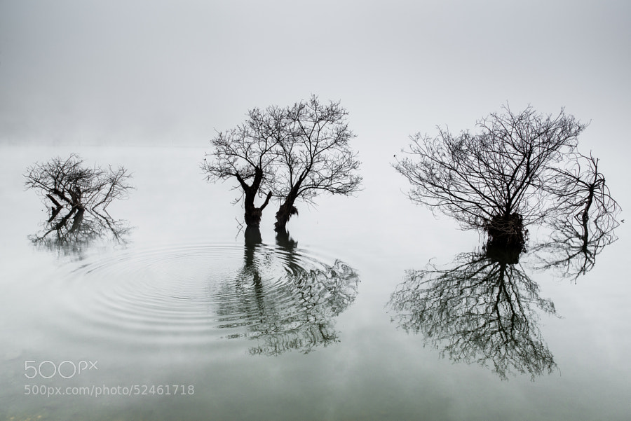 Photograph Ripples by Dowon Choi on 500px
