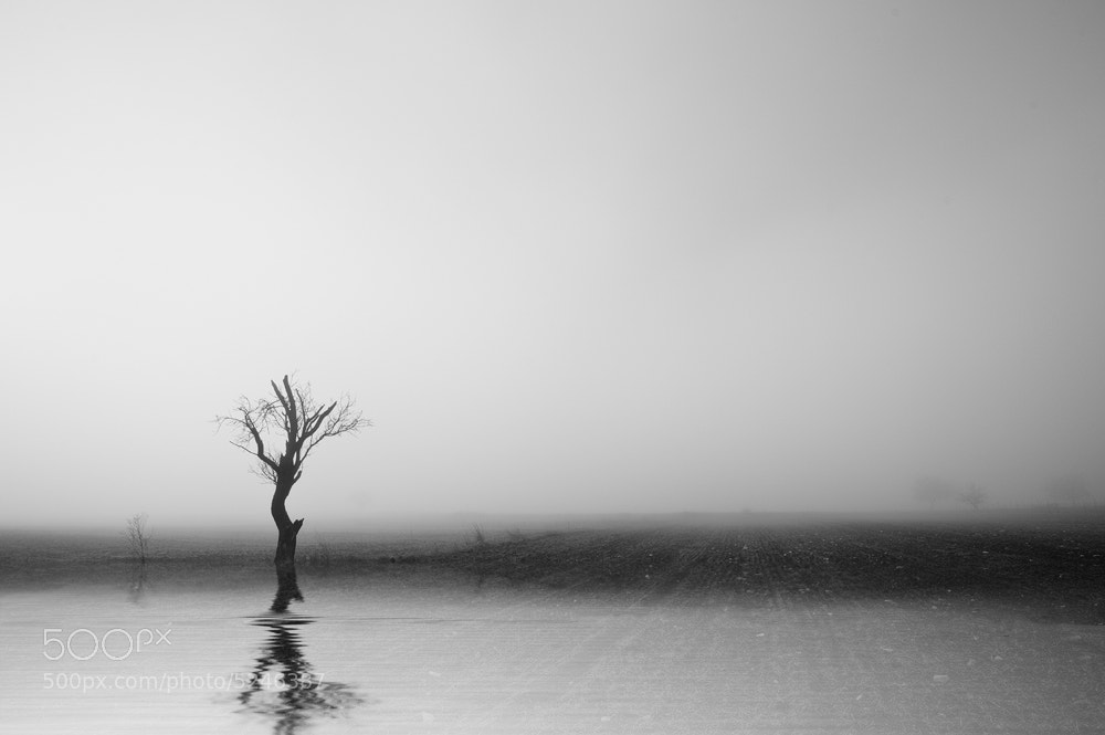 Photograph Fog Tree by Nikos Koutoulas on 500px