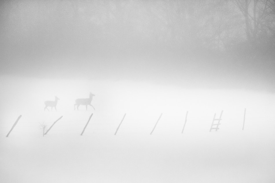 Photograph Two in the mist by PERRIN Gregory on 500px