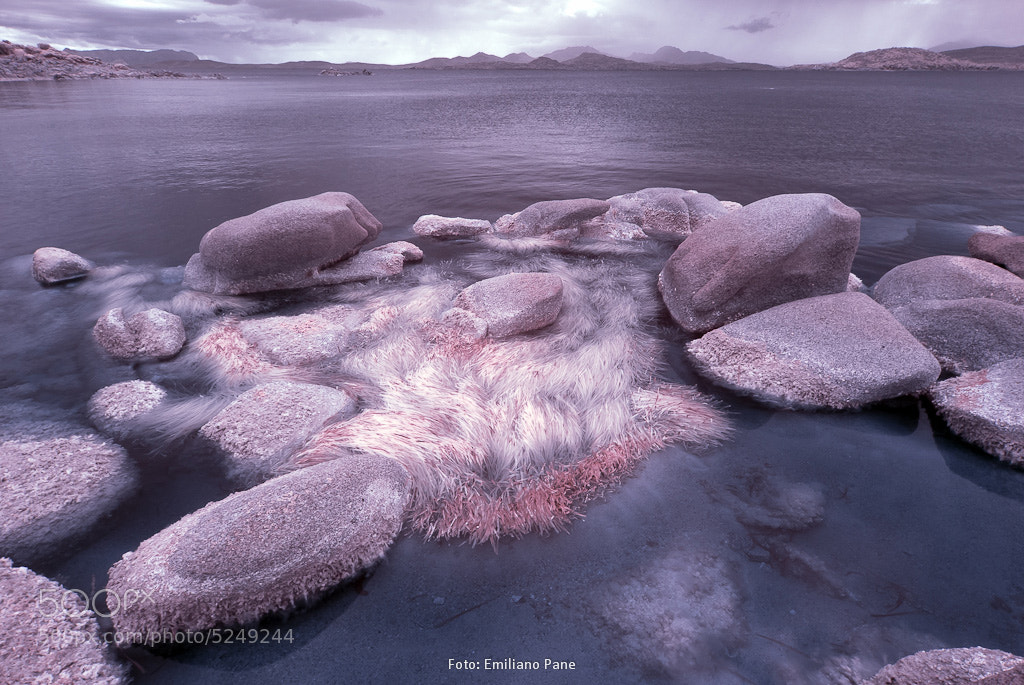 Photograph Infrared by Emiliano Pane on 500px