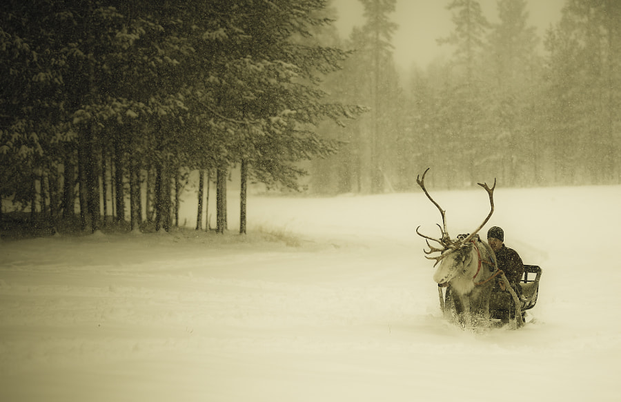 Photograph The Reindeer by ILGIN YAROGLU on 500px