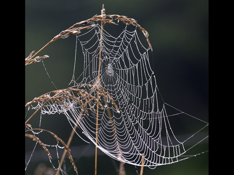 Photograph Oh what a tangled web we weave. by Marianne Venegoni on 500px