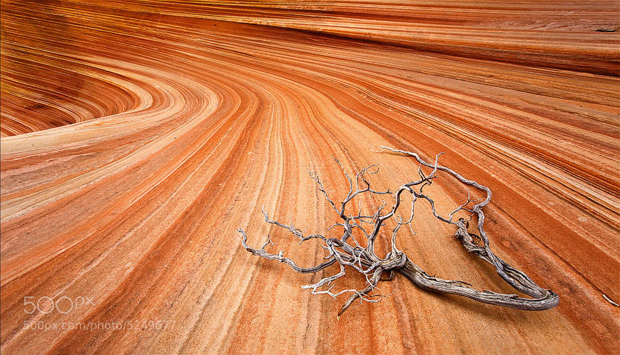 Photograph The Wave / Coyote Buttes / USA / 2010 by Road to the moon // Travel Photography // on 500px