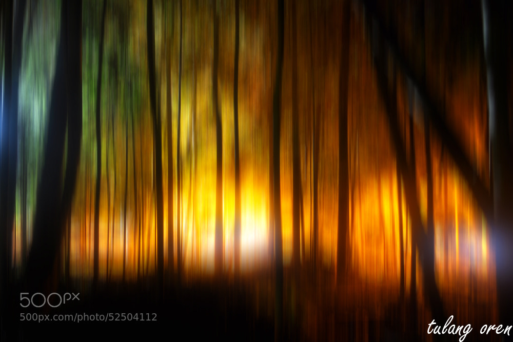 Photograph 'burning' forest by tulangoren on 500px
