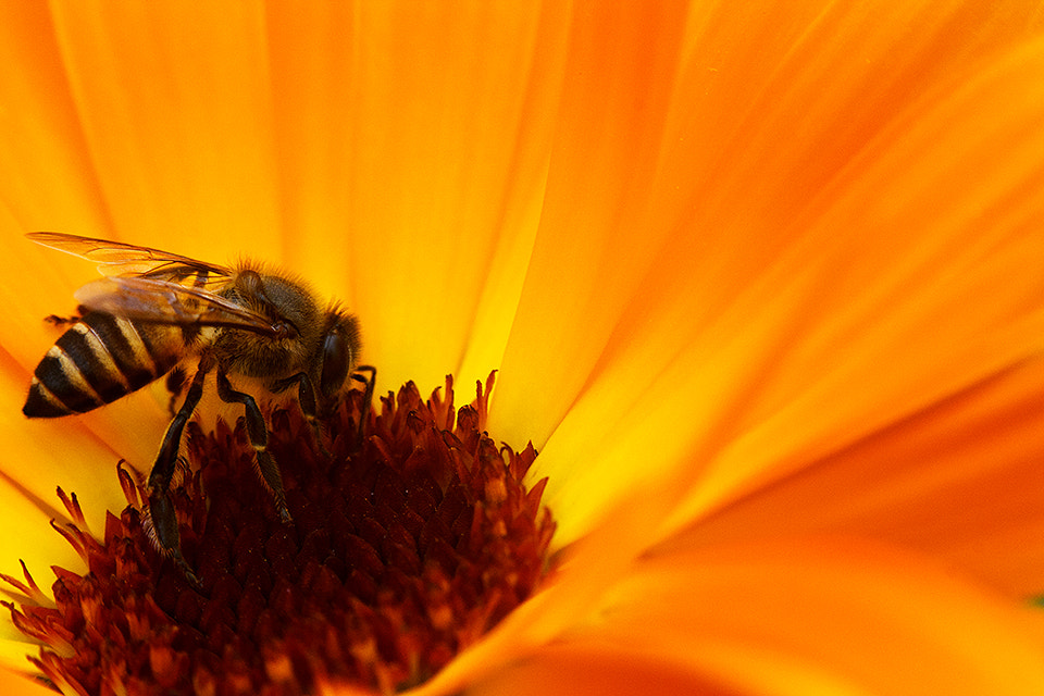 Photograph Fly in restaurant  by Vidhu S on 500px