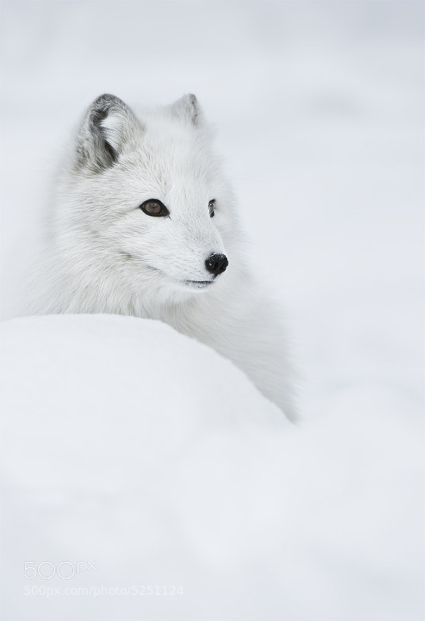 """""""Snow Queen"""" by Andy Astbury (AndyAstbury)) on 500px.com"""