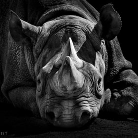 RHINO by Wolf Ademeit (WolfAdemeit)) on 500px.com