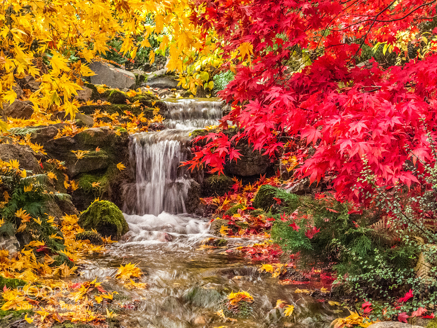 Photograph Colour Cascade by Paul Byrne on 500px