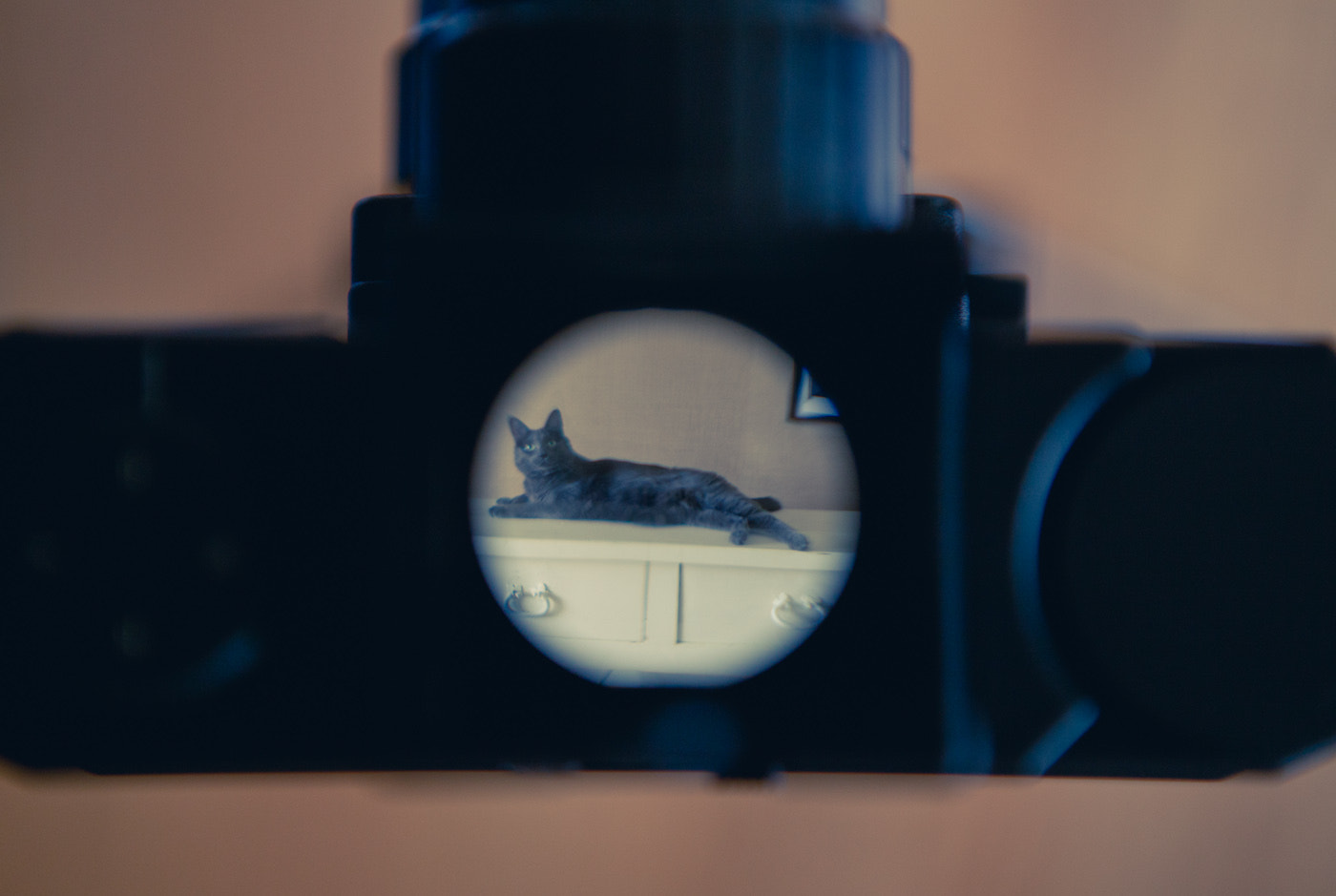 Photograph Cat in a Viewfinder by Benjamin Lehman on 500px