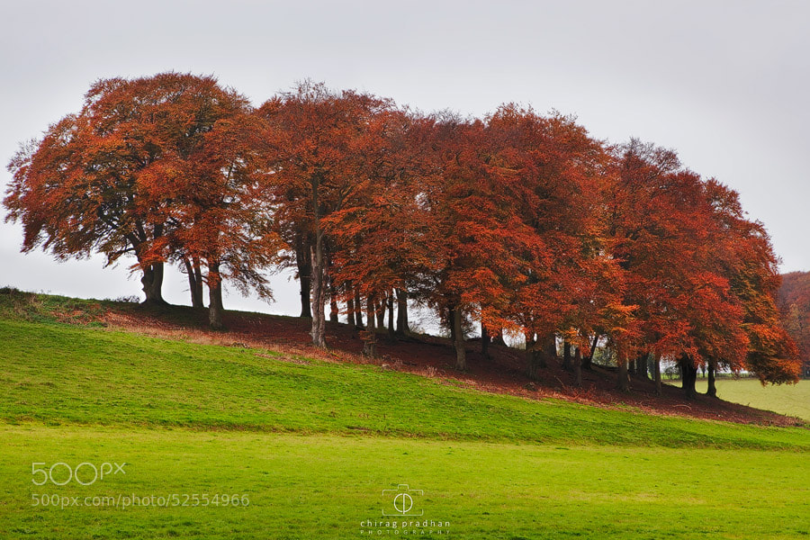 Photograph Autumn Foliage by Chirag Pradhan on 500px