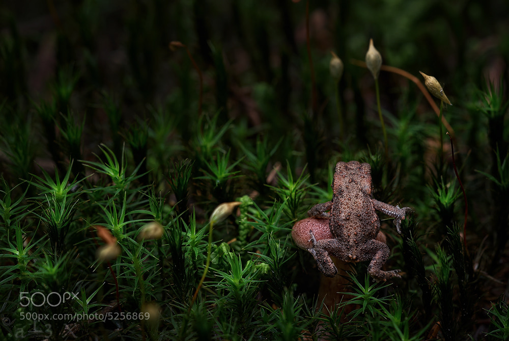 Photograph littlle frog by aL3X f. on 500px