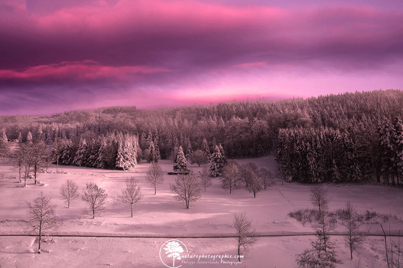 Photograph Pink Moment by Philippe Sainte-Laudy on 500px