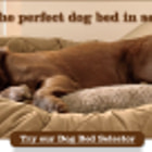Постер, плакат: Extra large dog beds