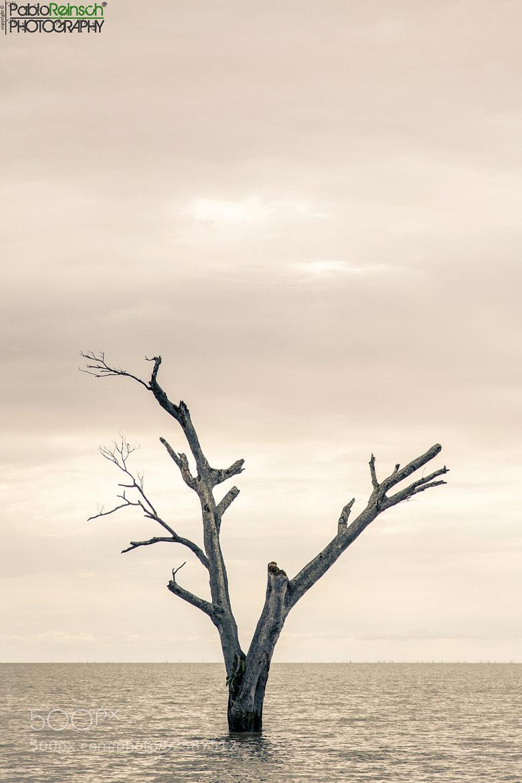 Photograph Silencio.- by Pablo Reinsch on 500px