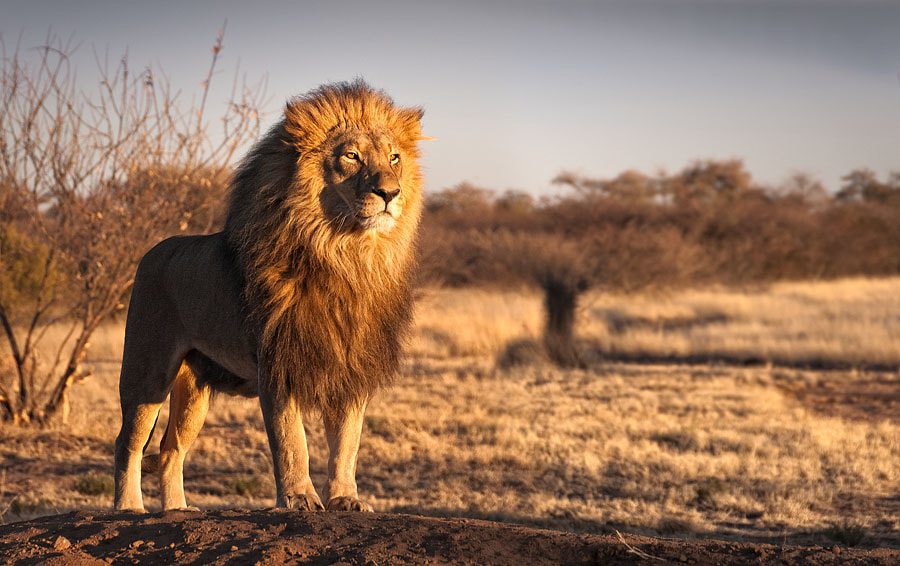 Photograph The King by Andrew Deer on 500px
