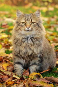 Handsome Beast