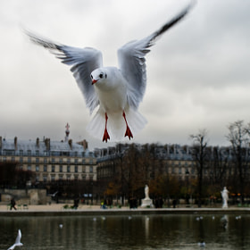 Hungry French Seagull by Sophie N