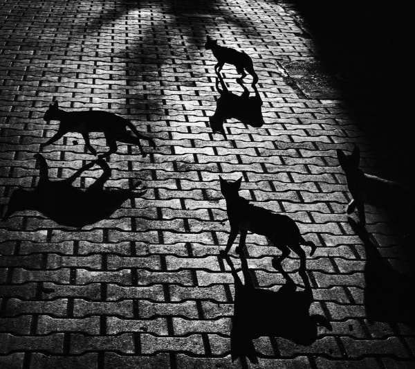 Photograph Wrong directions by Felicia Simion on 500px