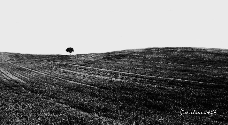 Photograph El arbol by Jose Maria Ramos Montero on 500px