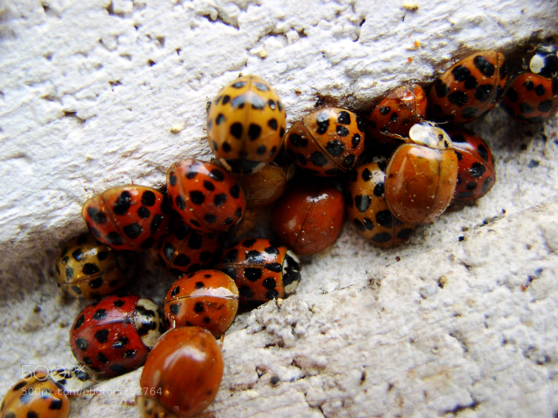Photograph Ladybug-a-palooza by Jason Samfield on 500px