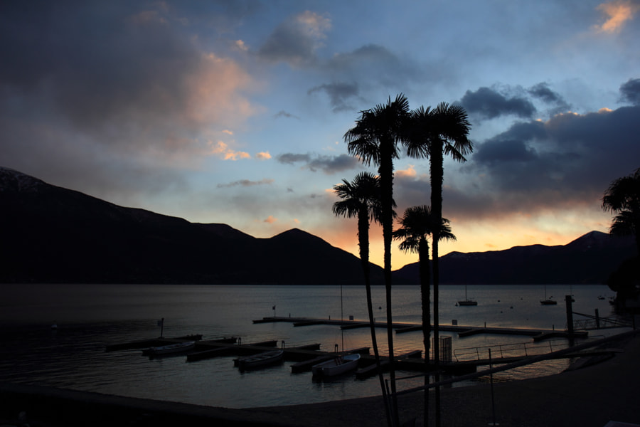 Palm Trees in Ascona