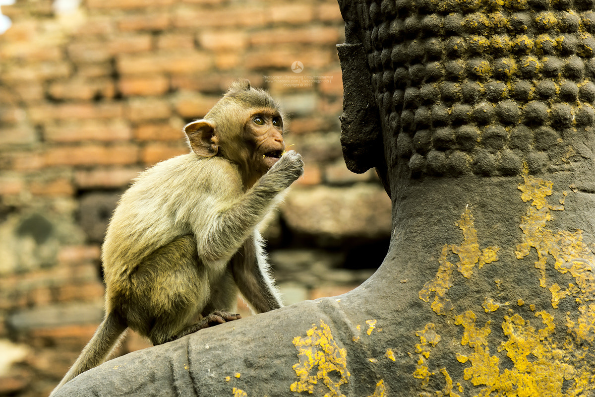 Photograph Temple of the Monkeys. by Tanutpong Chaiyathammwat on 500px