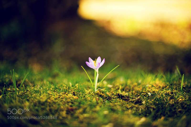 Photograph Lonely flower by Erik Olsson on 500px