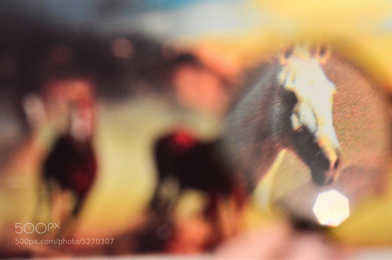 Photograph horses by Konstantin Floyd on 500px