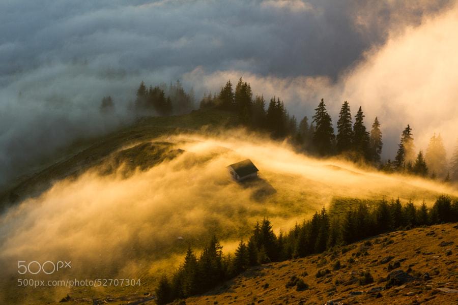 Photograph golden fog by Lazar Ovidiu on 500px