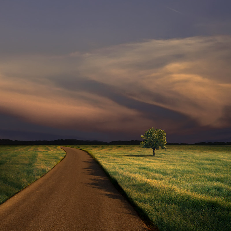 Photograph Alone on the Road at Dusk by Carlos Gotay on 500px