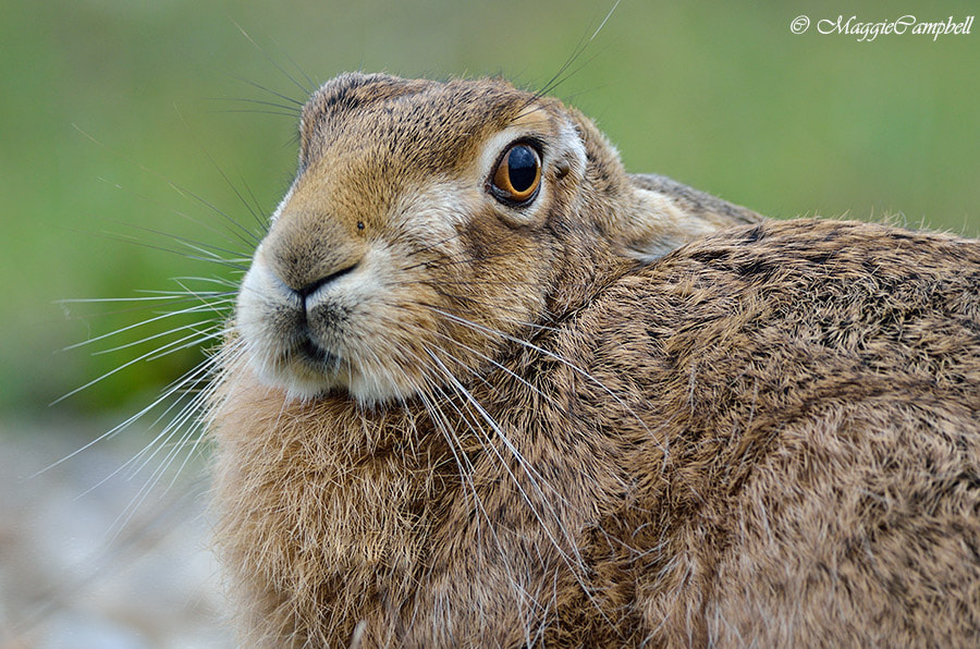 Photograph What are you looking at? by Maggie Campbell on 500px