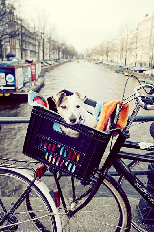 Photograph Amsterdam by Natalia Ilina on 500px