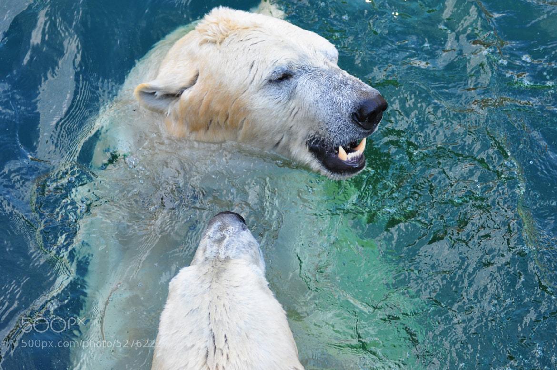 Photograph Ich möchte ein Eisbär sein... by jens fischer on 500px