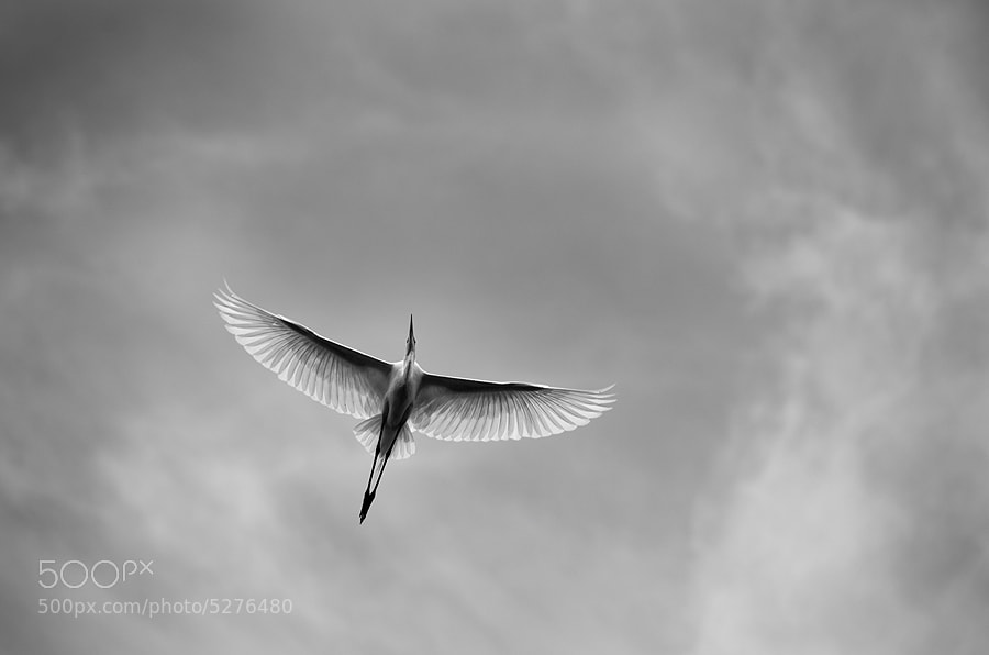 Photograph The Flight. by Anubhav Sood on 500px